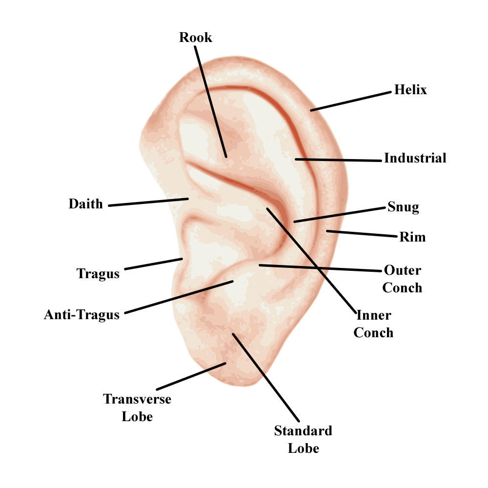 types of ear piercings - labeled ear